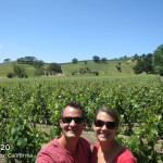 Los Olivos vineyards