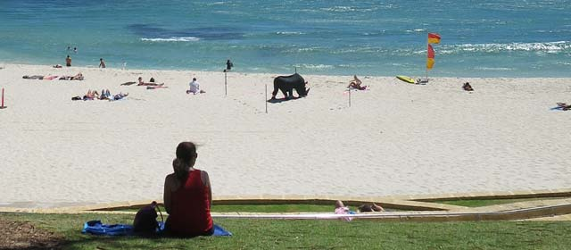 A Day at Cottesloe Beach