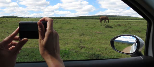 Self Drive Addo Elephant National Park