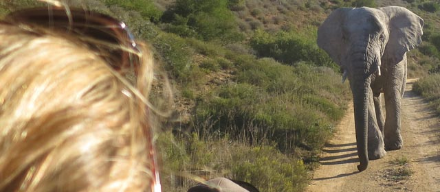 Elephant Encounter at Amakhala